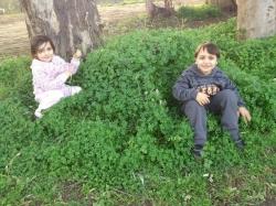 شادي وريم حلبي