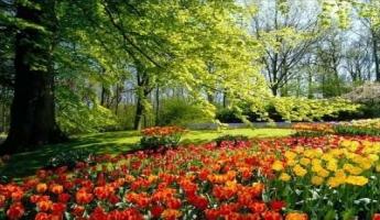 صورٌ في غاية الرَّوعة لمزارع الورود في هولندا