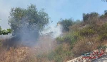 المغار : حريق كبير في كروم الزيتون بمحاذاة البيوت في حي الحريق